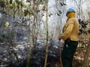 Bombero forestal controla fuego en Reserva Natural Laguna Tortuguero