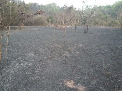 Incendios devastaron las reservas naturales