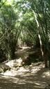 Bosque Monte Choca