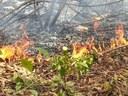 Bomberos forestales del DRNA y otras agencias combaten incendios en tres reservas naturales
