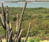Bosque Seco de Guánica será un centro de monitoreo internacional de cambios climáticos