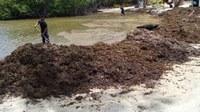 DRNA da a conocer plan de acción para el manejo de acumulación extrema de sargazo en las costas