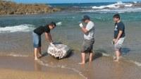 DRNA investiga la muerte de una tortuga marina encontrada en una playa en Isabela