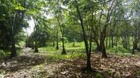 DRNA y Corredor del Yaguazo firman acuerdo de colaboración en beneficio de la Reserva Natural de la Ciénaga Las Cucharillas, en Cataño