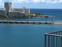 Grandes concentraciones de algas llegan a las costas de Puerto Rico más temprano de lo anticipado