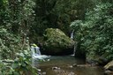 Fondos disponibles para la creación de bosques comunitarios  a través del Servicio Forestal de los Estados Unidos
