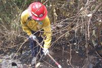 DRNA REALIZA TRABAJOS DE PREVENCIÓN DE INCENDIOS FORESTALES EN GUÁNICA