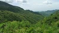 Firme el Compromiso de Proteger el Cerro Las Planadas en Cayey y Salinas como Reserva Natural