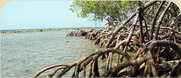Estuario Bahía de Jobos
