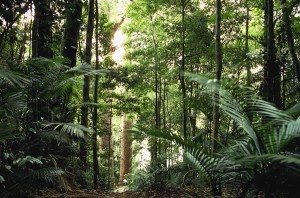 Análisis del paisaje forestal