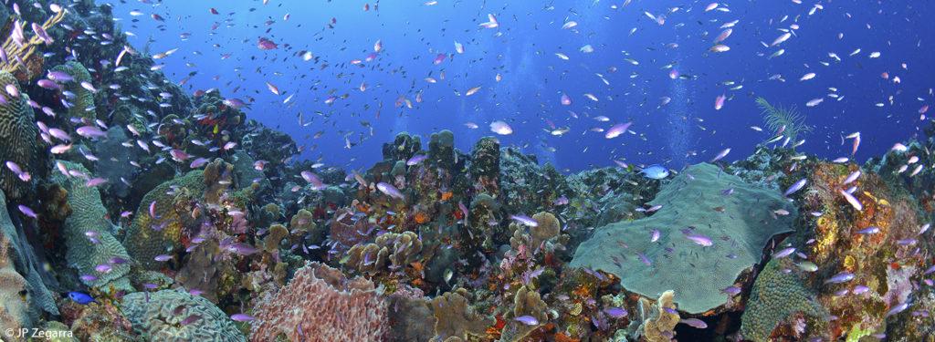 Arrecifes de Isla Desecheo. Foto por: JP Zegarra.
