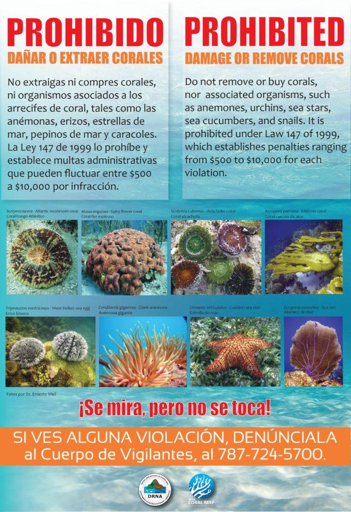 Cartel: Prohibido dañar o extraer corales