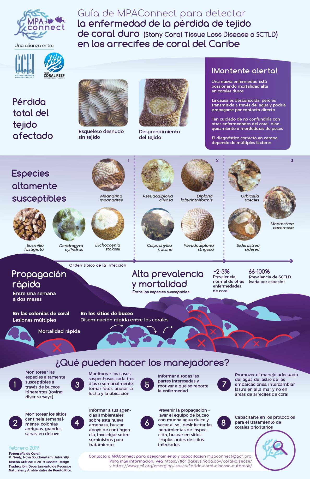 Guía para detectar la enfermedad de corales SCTLD